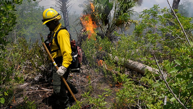 File: Rookery Bay National Estuarine Research Reserve have released plans for prescribed burns.