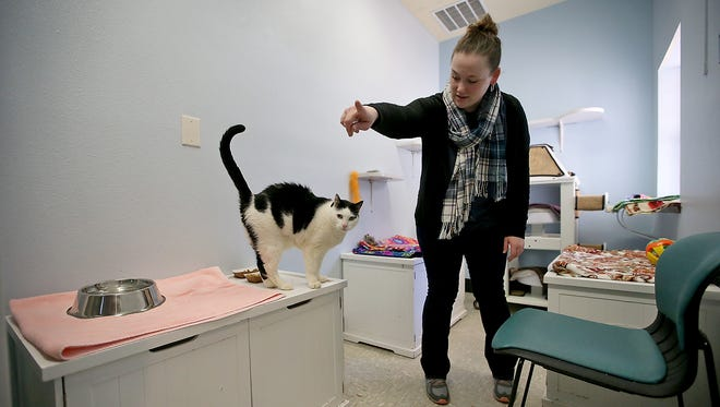 Sarah Moody-Cook, director of animal welfare for the Kitsap Human Society, and Neo in the shelter's Kitty Lounge on Monday. The shelter is planning a $5.8 million expansion, which could open next year if fundraising can be completed.