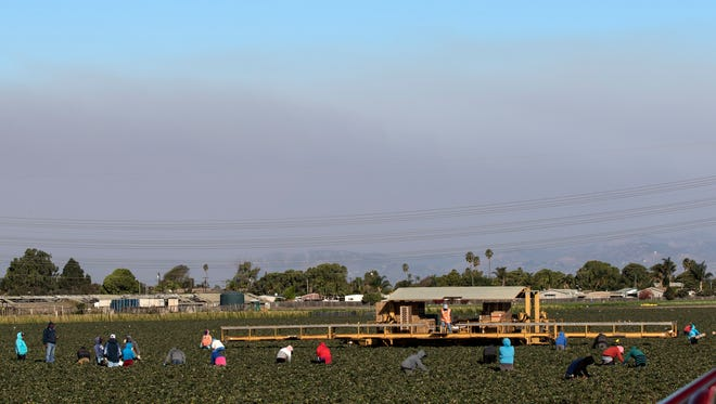Field workers are seen working against a smoke-filled sky at a strawberry farm in Oxnard on Friday.