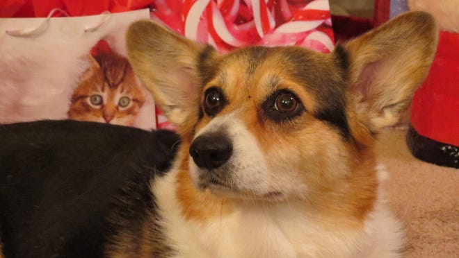 The Rev. Cynthia Taylor recently lost her corgi Kelsey, but says she knows she'll be reunited with her pet again one day.