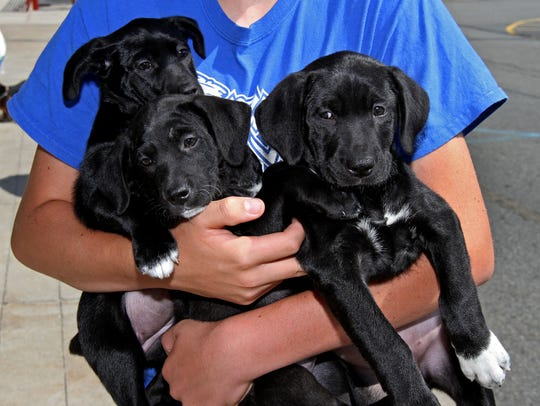 Help homeless pets at the Father's Day 5K Fun Run on Sunday at Freedom Park in Randolph.