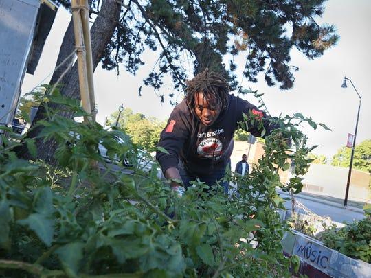 Community activist Tonya Noel Stevens, Rochester, works in the community garden she started at the corner of Jefferson Ave. and Flint St. Tuesday, Oct. 4, 2016.