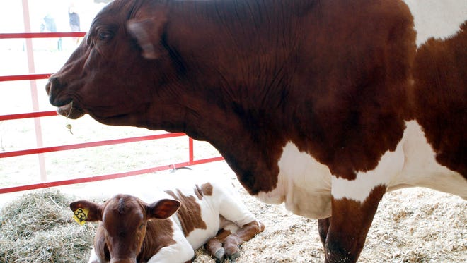The So You Want to Raise Beef? Workshop will discuss marketing, breeding strategies, facilities and nutrition for cow/calf herds, and feeding/finishing dairy beef or dairy crossbred beef.