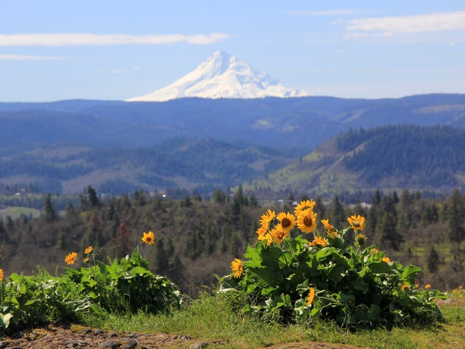 Oregon Top 5: Best easy wildflower hikes in the Columbia ...