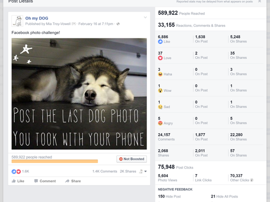 A display of Oh my Dog's social media metrics.
