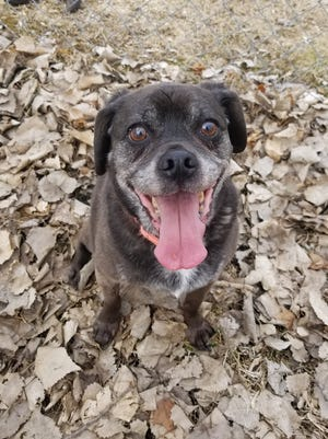 Smidget smiles while thinking about  meeting her new family.