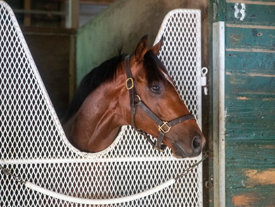 Roaming Union, trained by Kelly Breen, will be running in this week's Haskell Invitational.