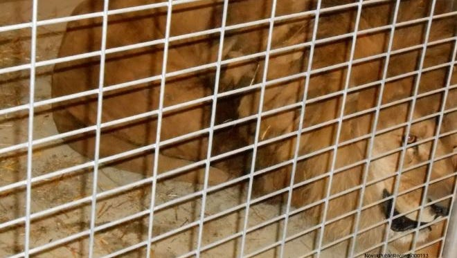 Exotic animals taken from a farm in northwest Ohio are still in temporary housing in Reynoldsburg.