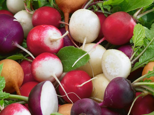 Fiesta Blend is a mix of colorful, tasty mix of radishes.