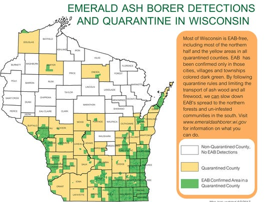 Bu following quarantine rules and limiting the transport of ash wood and all firewood, the spread of emerald ash borer can be slowed down.
