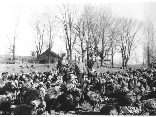 The Rowley family turkeys on the Rowley farm on Lake Road in Milton in the 1940s.