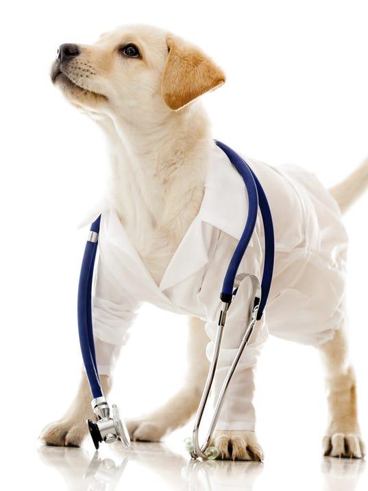 dogpic.jpg