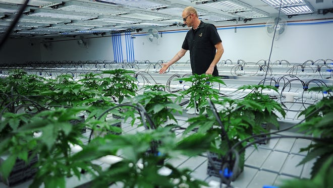 Jonathan Hunt, vice president of Monarch America, Inc., gives a tour of the Flandreau Santee Sioux Tribe's marijuana growing facility Friday, Oct. 16, 2015, in Flandreau, S.D.