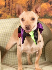 Juan Pablo is available for adoption at 952 W. Melody
