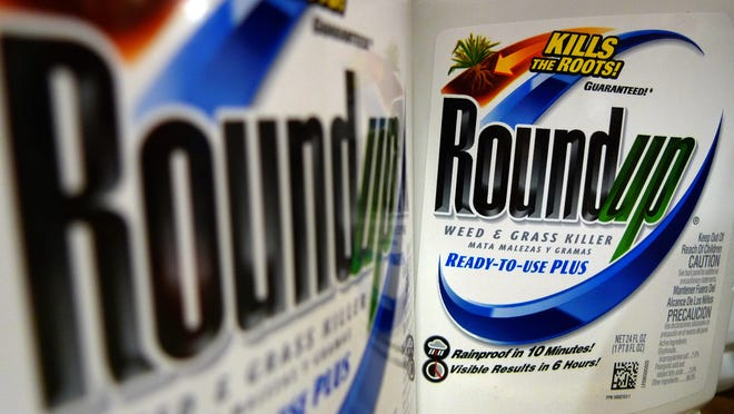 In this June 28, 2011 file photo, bottles of Roundup herbicide, a product of Monsanto, are displayed on a store shelf, in St. Louis.