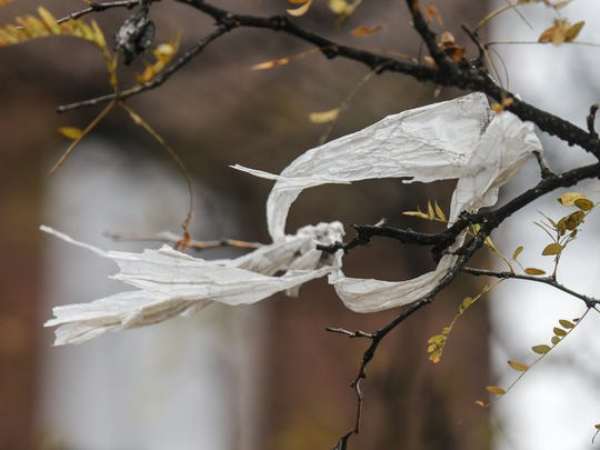 A plastic bag whips in the wind on a tree.