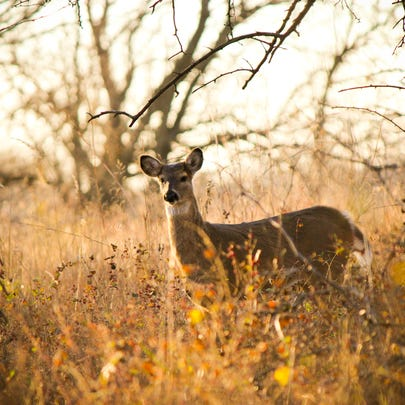 Have you applied for a Pennsylvania antler-less deer