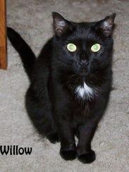 blackcat-willow