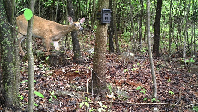 Hal Korber, photo and video specialist with the Pennsylvania Game Commission, captures animals in their natural habitat with a trail camera.