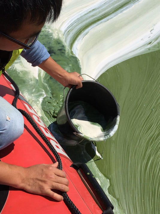 BUR20150826 Cyanobacteria Missisquoi Bay