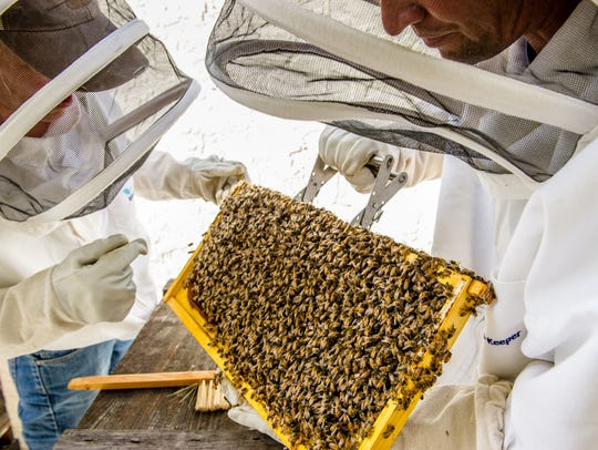 Bees are the only insect that produces food eaten by