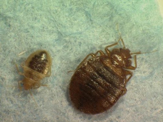 -Bedbug Cities_Wolf.jpg_20100824