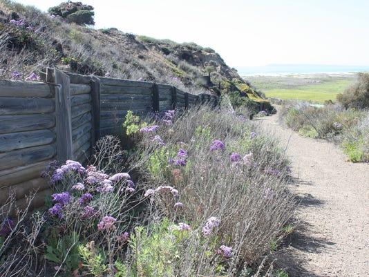 Border Field State Park 1 flowers