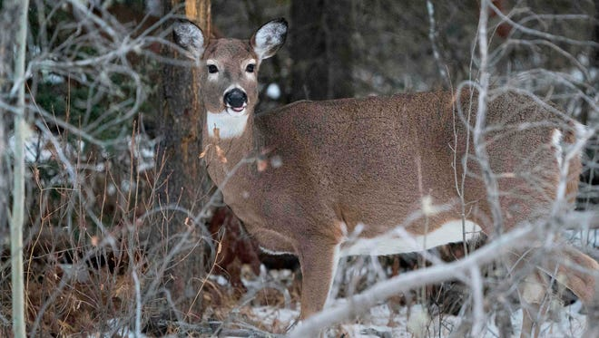 Michigan officials have scheduled an additional firearm hunting season for antlerless deer in Alpena County.