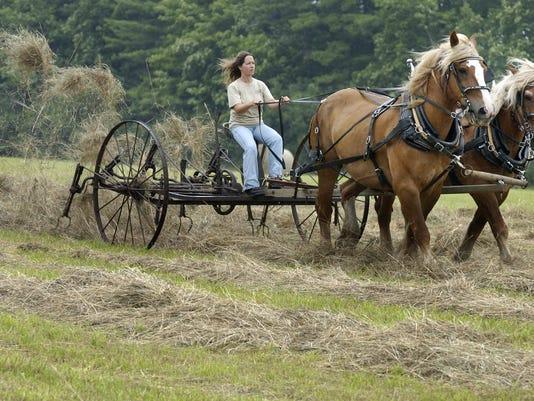 horses-28-c1