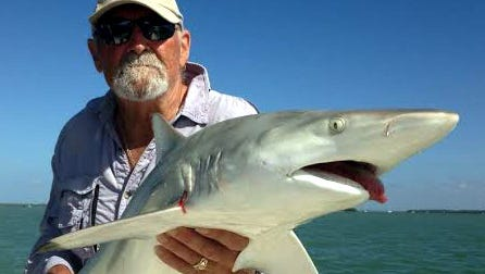 A blacktip shark is among sharks that inhabit waters in Southwest Florida. Learn more about sharks at Lovers Key State Park.