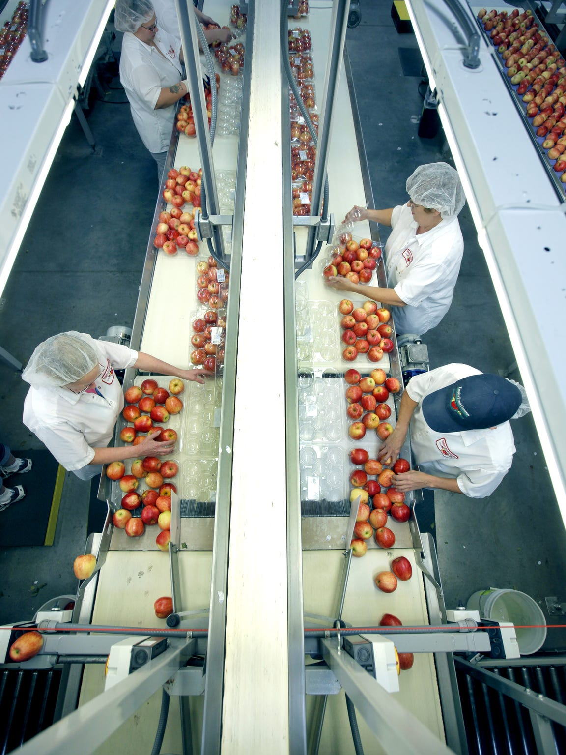 Workers pack Premium Gala apples at Empire Fruit Growers