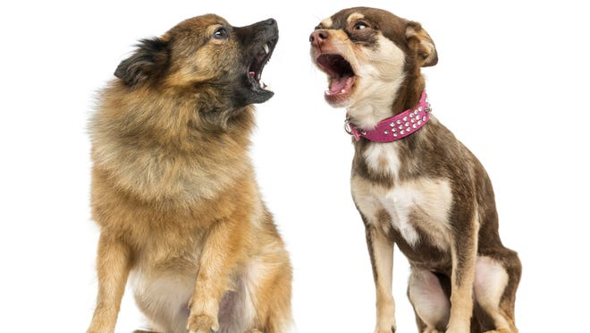 Two dogs shouting at each other