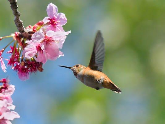 635943312023124683-birds.jpg