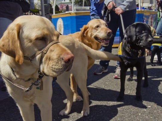 Berkeley decides more review is needed before it adopts its anti-dog-tethering ordinance. Dogs that are part of the Canine Companions for Independence are seen at their booth at the Toms River Food Fest in this file photo from earlier this month.
