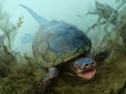 Victor Leshyk's depiction of what the now extinct turtle Arvinachelys goldeni would have looked like 76 million years ago.