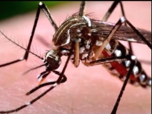 636056819481648349-img-Zika-possible-in-Monterey-County-health-officials-war