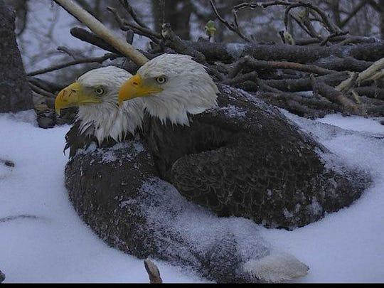 Photo: American Eagle Foundation