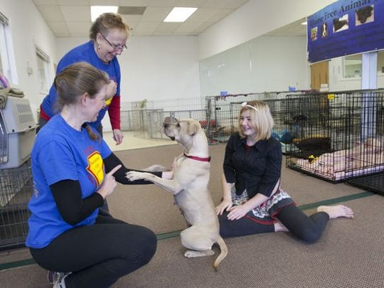 Jen McFadden (left), founder of Home Free Animal Rescue, plays with Mama Susie, a dog up for adoption in her store on Route 9 in Howell. The space in the strip mall was donated to the nonprofit for use during the holiday season. Volunteers Alice Gray (center), Jackson and Maggie McFadden, 13 (Jen's daughter), also help run the store.