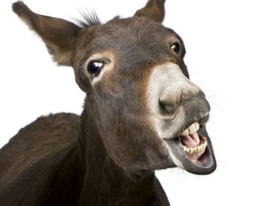 The New Jersey Society for the Prevention of Cruelty to Animals released the name of a 19-year-old Jackson man who was charged last week in connection to the deaths of two donkeys and the dumping of their carcasses in a power company right-of-way.