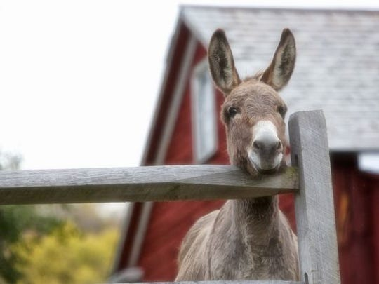 A Jackson man has pled guilty to dumping two dead donkeys in a utility right-of-way last year.