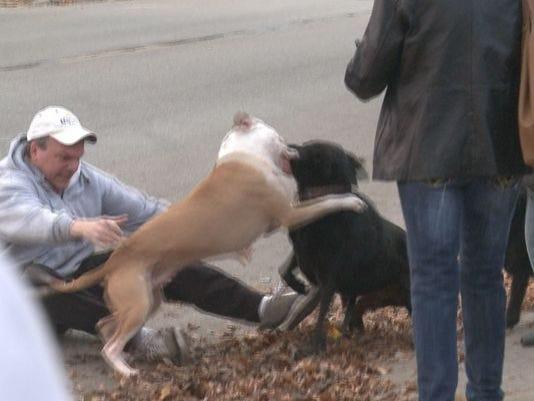 pit bull attack.jpg