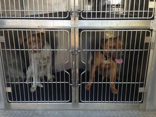 1398105983000-blenheim-dogs-2-.jpg