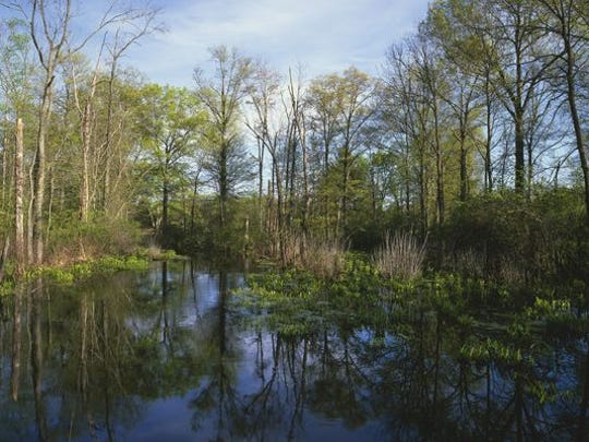 Black Brook, Great Swamp National Wildlife Refuge, Morris County.