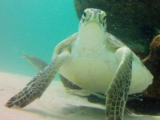 web - turtle.jpg