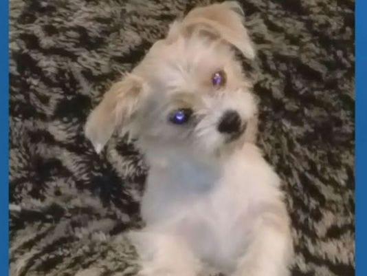 dog killed by pitbill.jpg