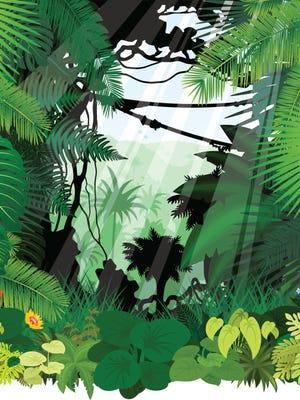 vector morning in jungle