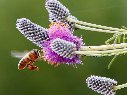 635749849843039804-BC-US--Food-and-Farm-Urban-Beekeeping-re-ILCA207-9dbe