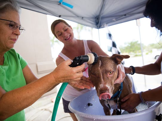 Melissa Mowrey, left, rinses the soap off her dog Ike