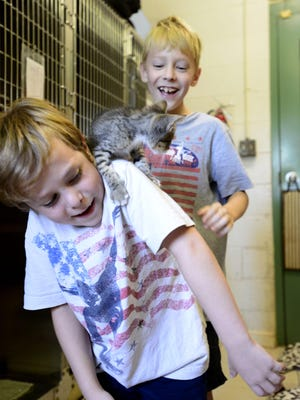 Sam Griffin, 7, and his brother David, 9, play with kittens that are up for adoption recently at the Pensacola Humane Society. On August 8 the humane society is holding a dog-friendly 3K walk, Paws on Palafox, in downtown Pensacola raising money and awareness for the Pensacola Humane Society Barbara Grice Memorial Spay and Neuter Clinic. Some of the money raised will go to offset the cost of spay and neuter procedures