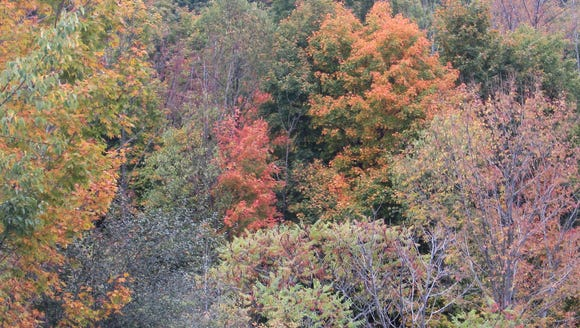 Gorgeous fall colors are draping the hillsides of the